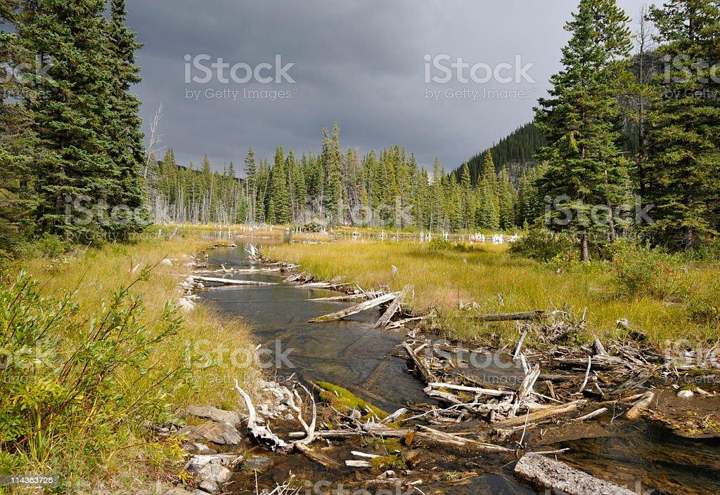 Beaver Pond,near Bragg Creek,Kananaskis Country,Alberta,Canada. royalty-free stock photo