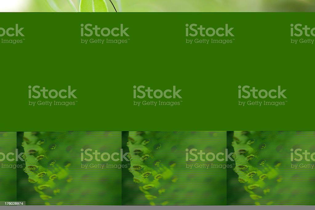 Beaver Tail Cactus, Opuntia basilaris royalty-free stock photo