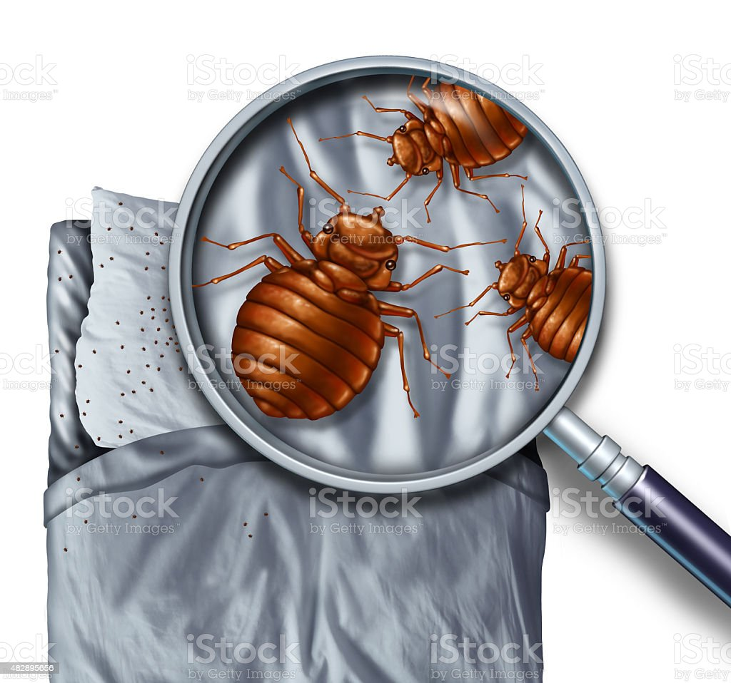 Bed Bug Infestation stock photo