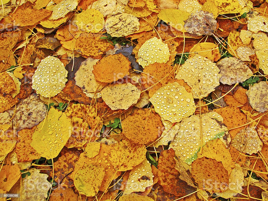 Bed of fallen leaves royalty-free stock photo