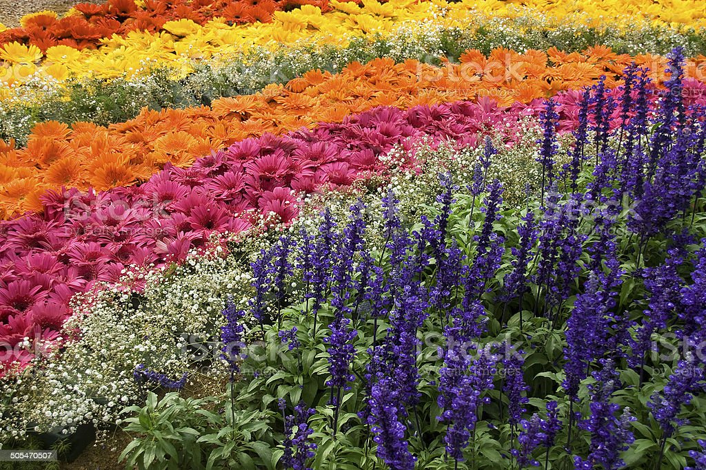 Bed of Floral Rainbow stock photo