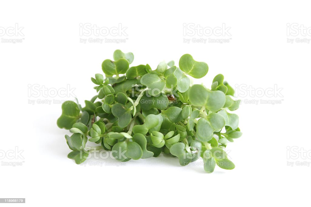 Bed of green watercress on a white background stock photo