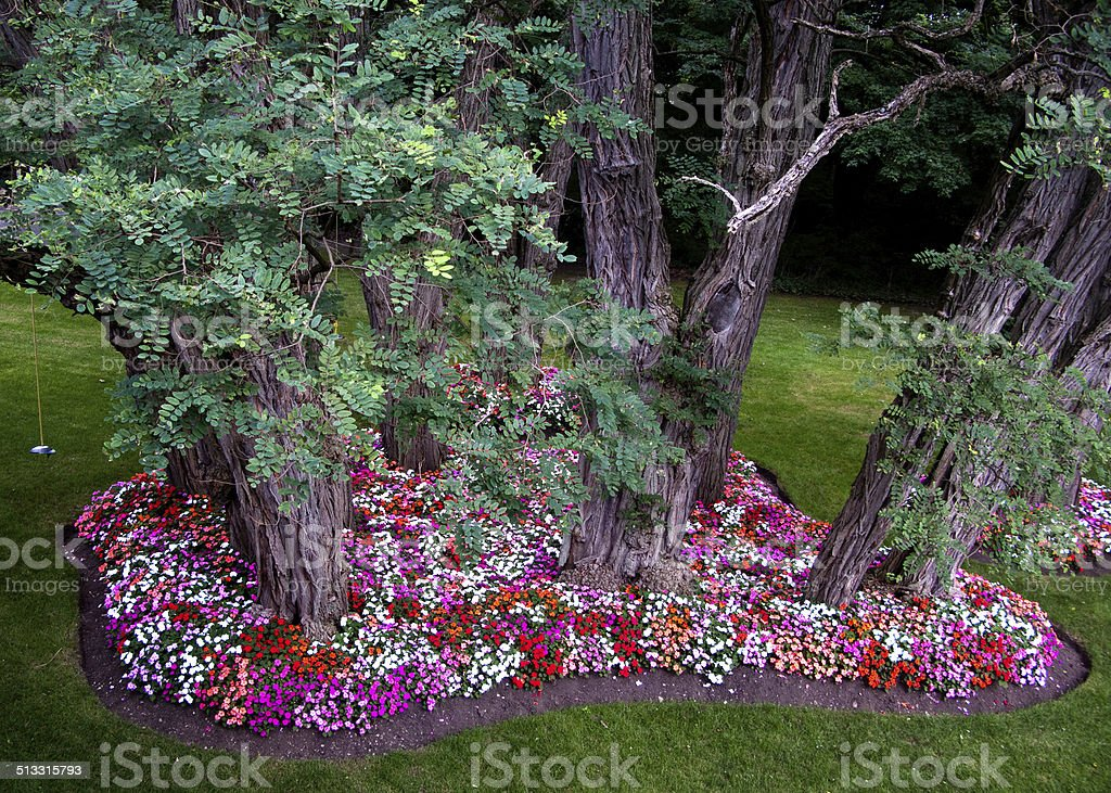 Bed of Impatiens stock photo