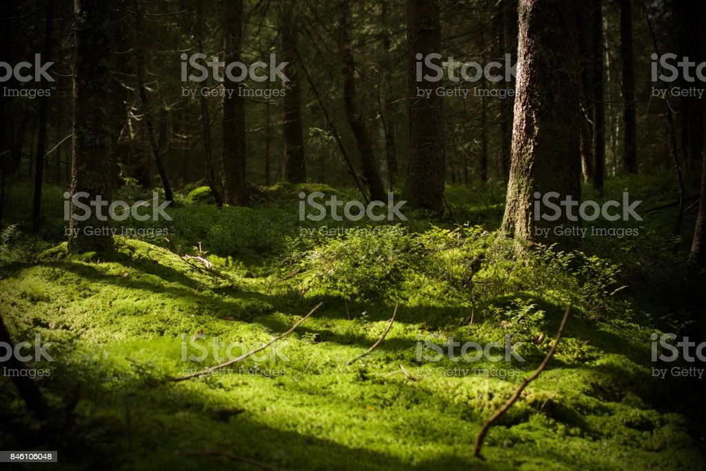 Bed of moss stock photo
