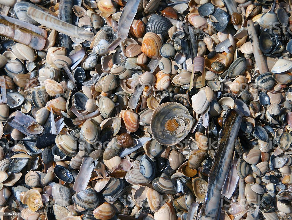 Bed Of Mussels royalty-free stock photo