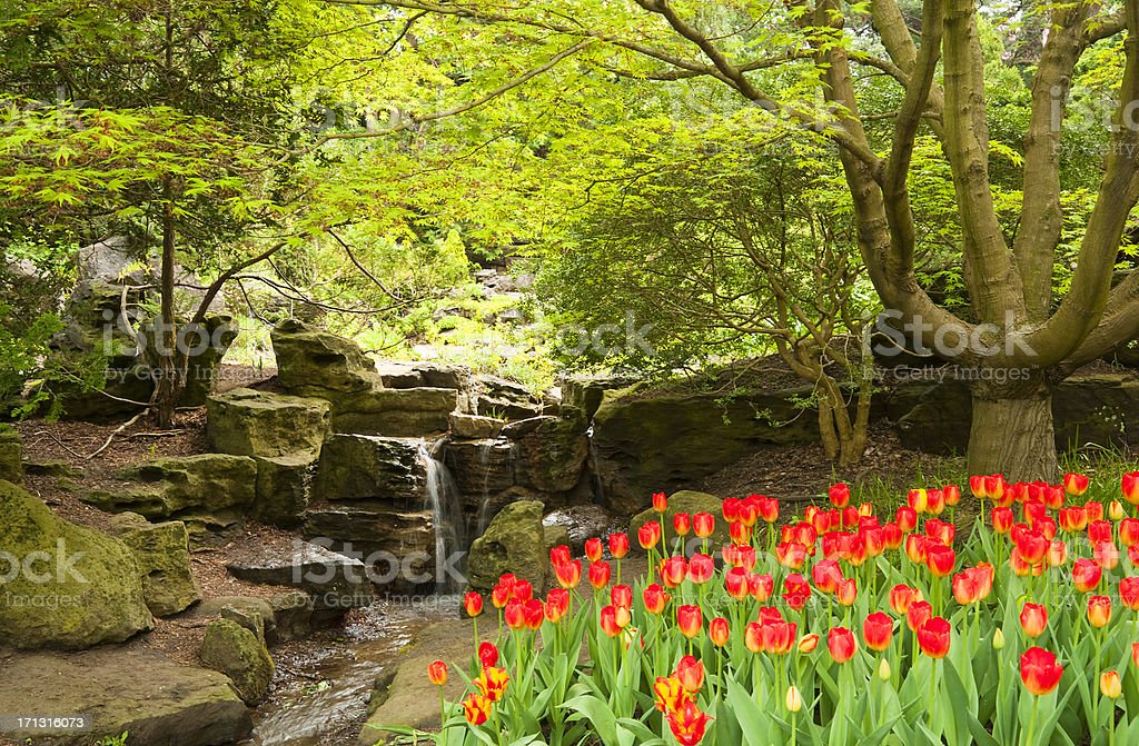 Bed of Red Tulips royalty-free stock photo
