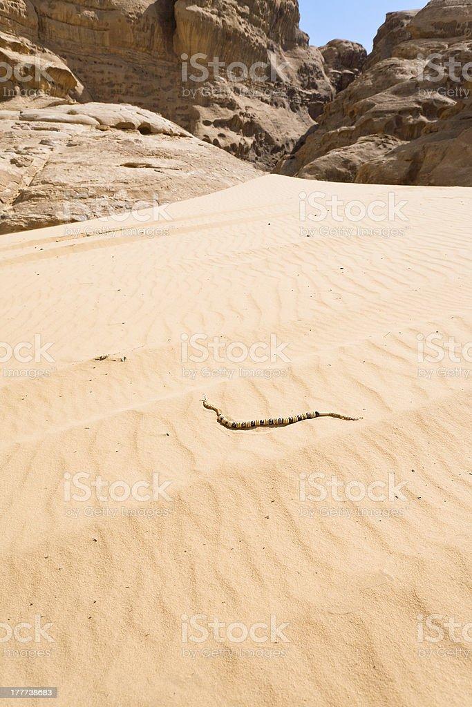 Bedouin beads on yellow sand dune dessert royalty-free stock photo