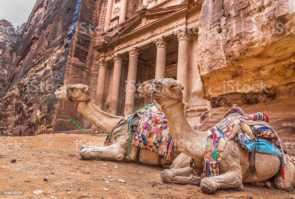 Bedouin camel rests near the treasury Al Khazneh stock photo