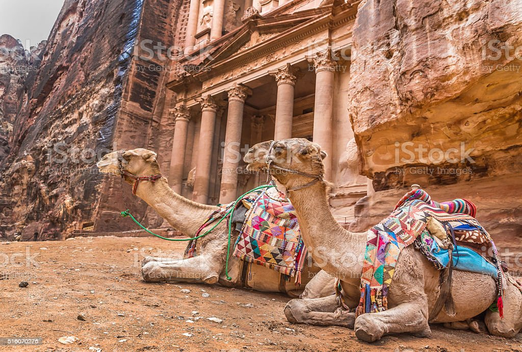 Bedouin camel rests near the treasury Al Khazneh stock photo