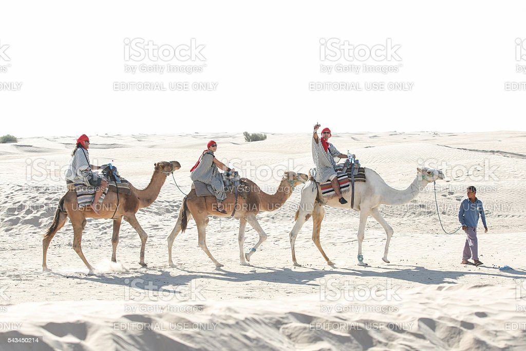 Bedouin leading tourist group on camels stock photo