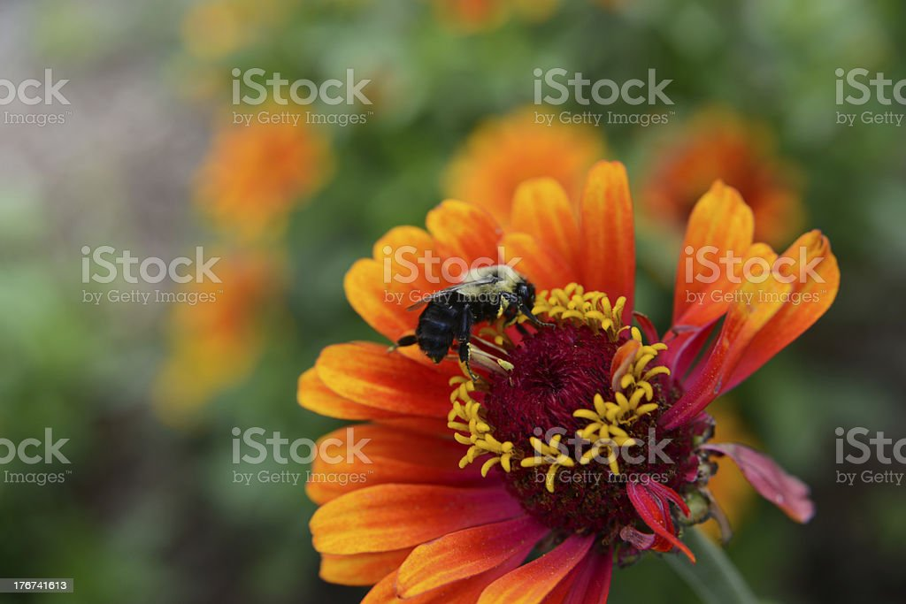 Bee and Beautiful Flower stock photo