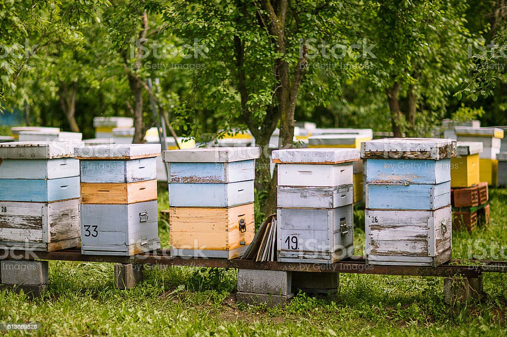 Bee box stock photo