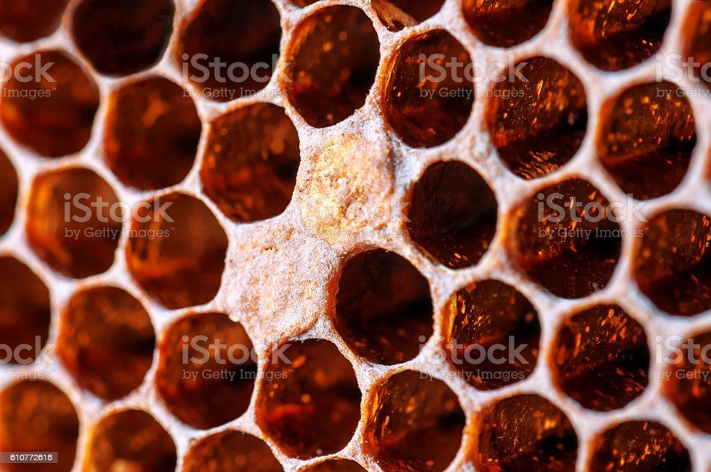 bee combs texture stock photo