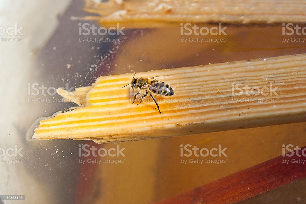 Bee agua potable en el verano foto de stock libre de derechos