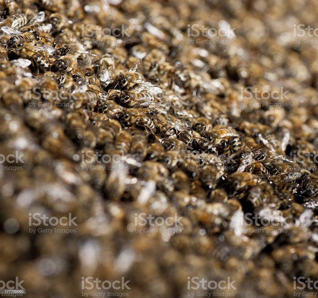 bee family royalty-free stock photo