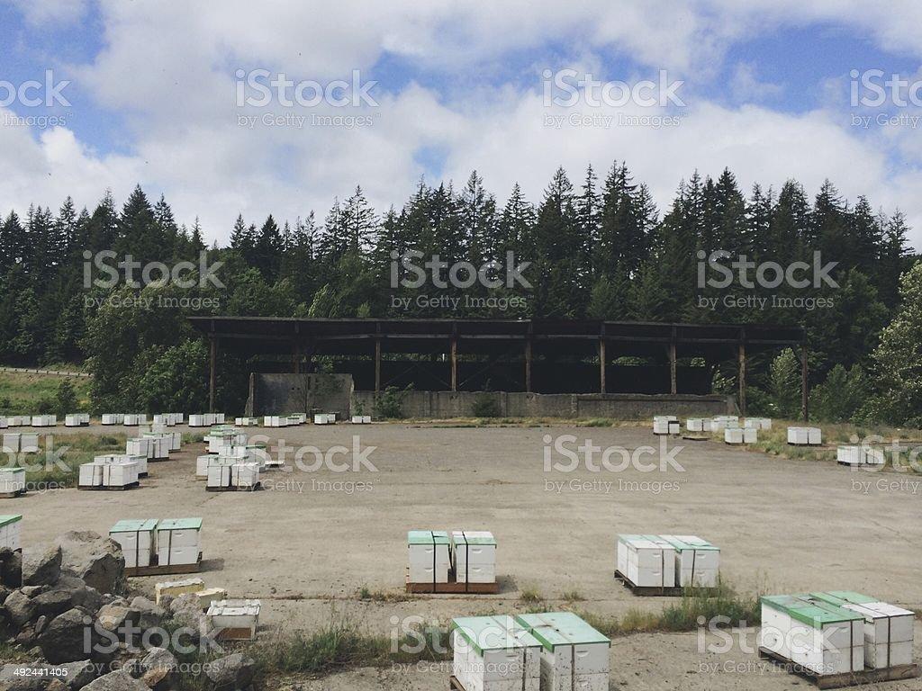 Bee Farm Organic Honey royalty-free stock photo