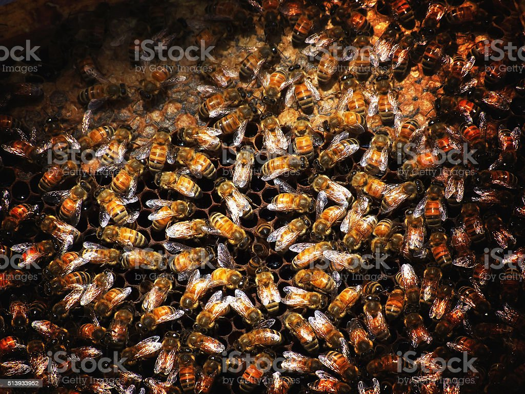 Bee farming is an occupation of Thailand has been popular. stock photo