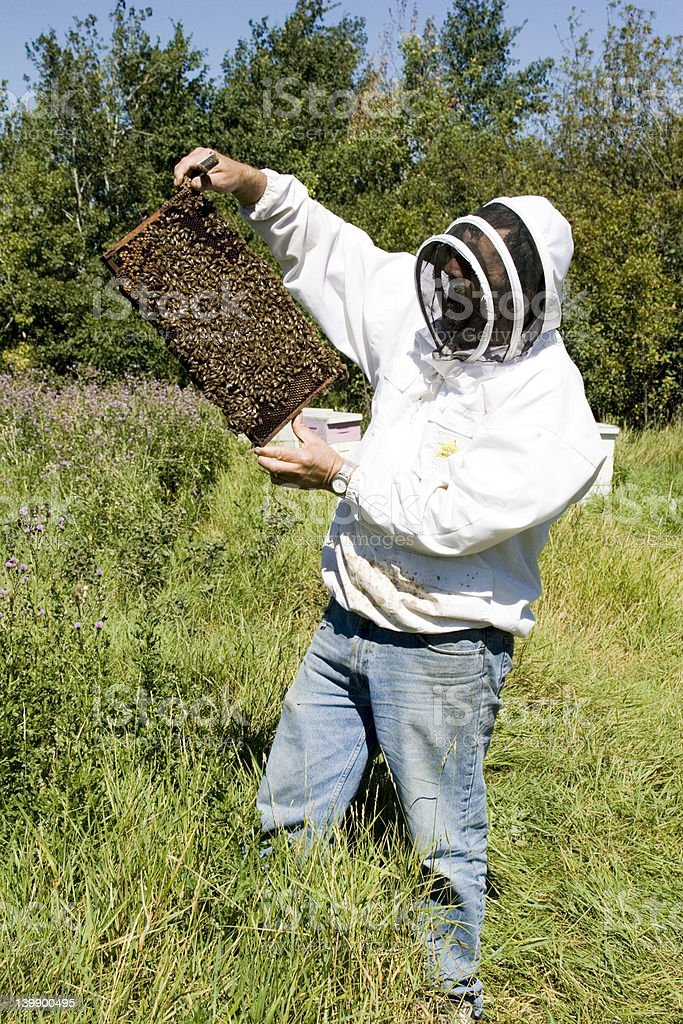Bee Farming royalty-free stock photo