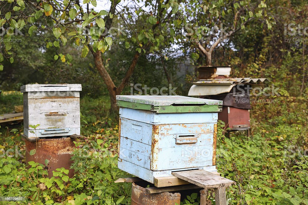 bee hive in  garden royalty-free stock photo
