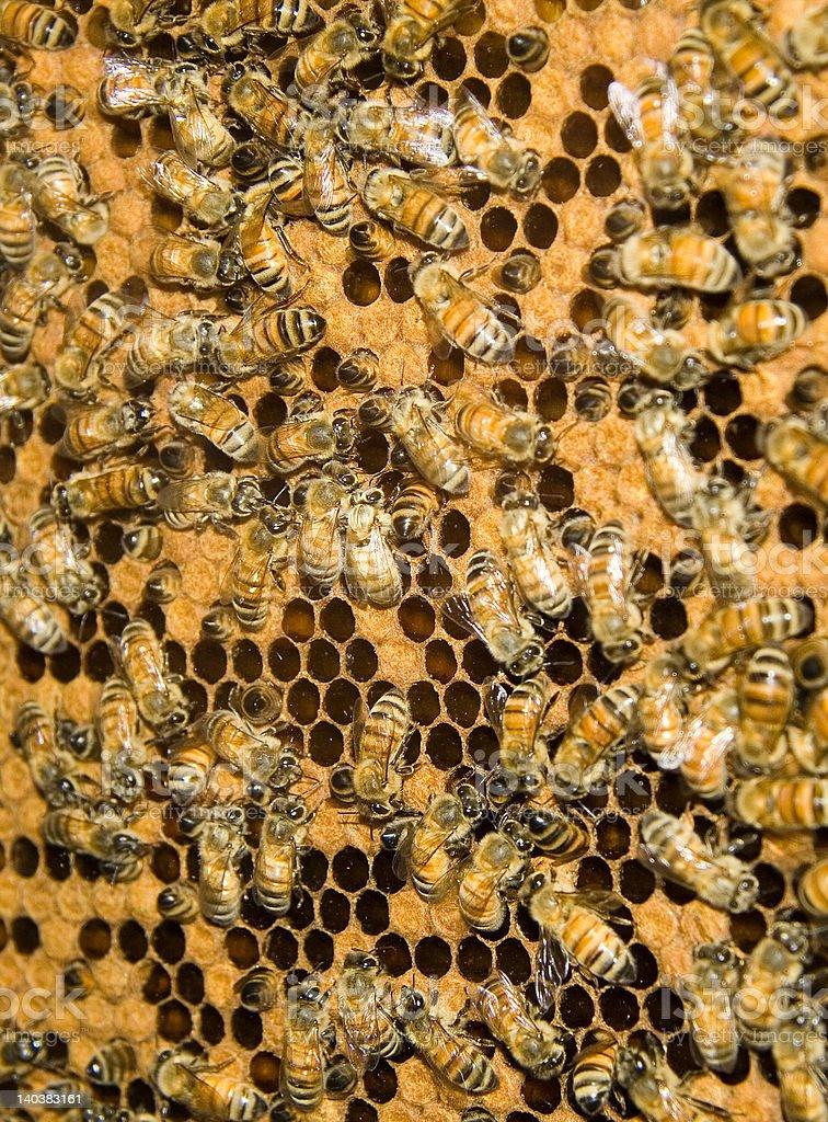Bee hive royalty-free stock photo
