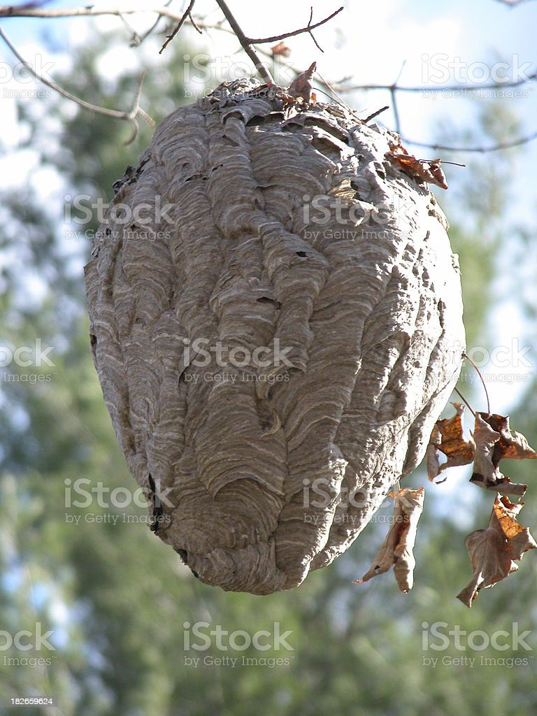 Bee Hive royalty-free stock photo