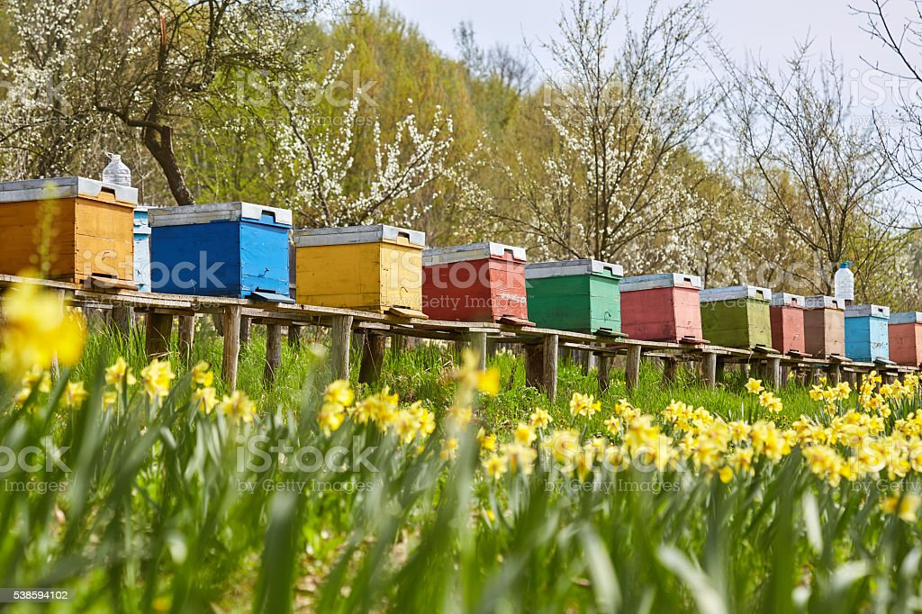 Bee hives in the field and orchard stock photo