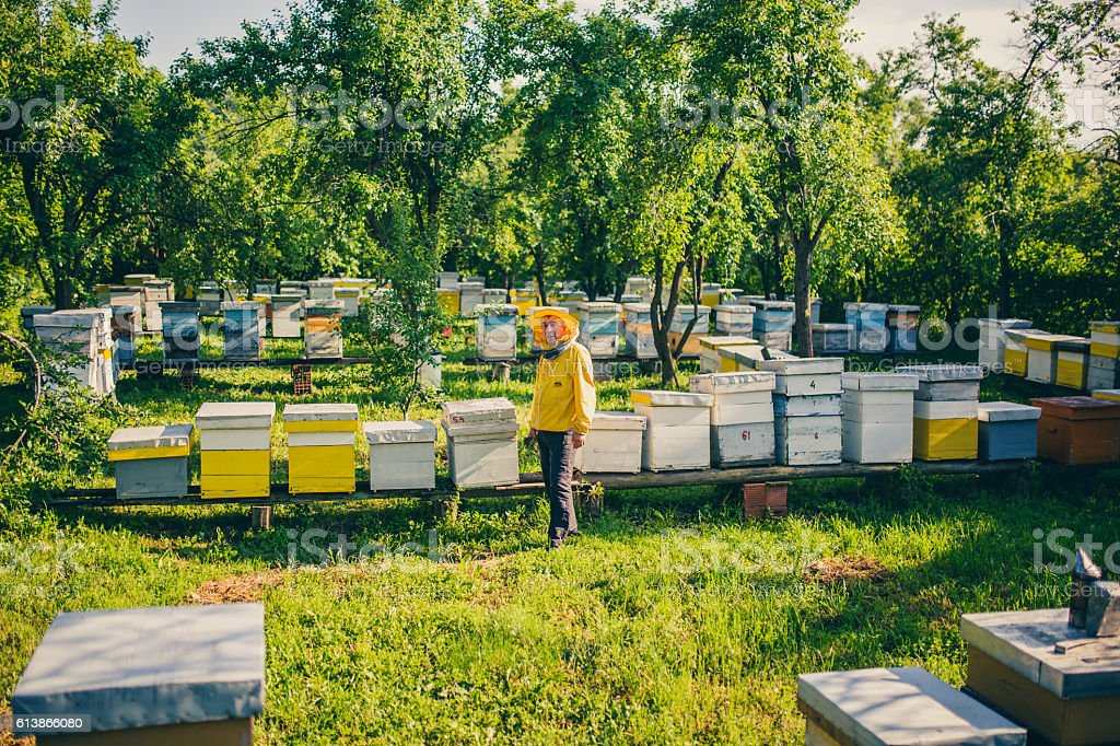 Bee hives in the field stock photo