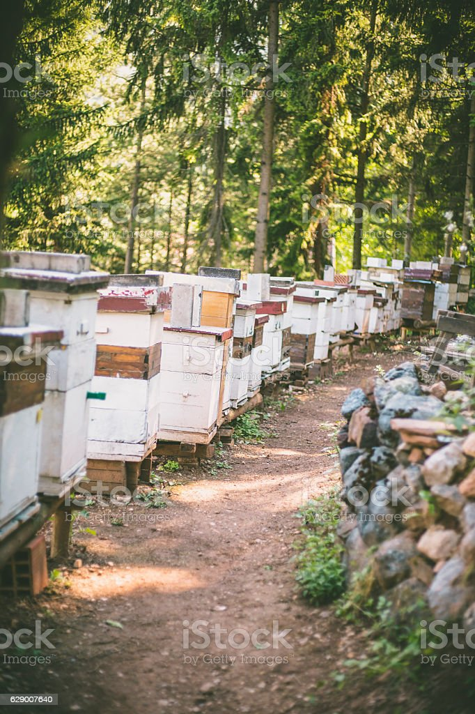 Bee hives in the meadow at daylight. stock photo