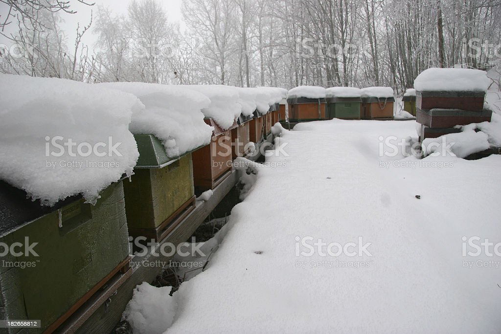 Bee hives in the snow stock photo