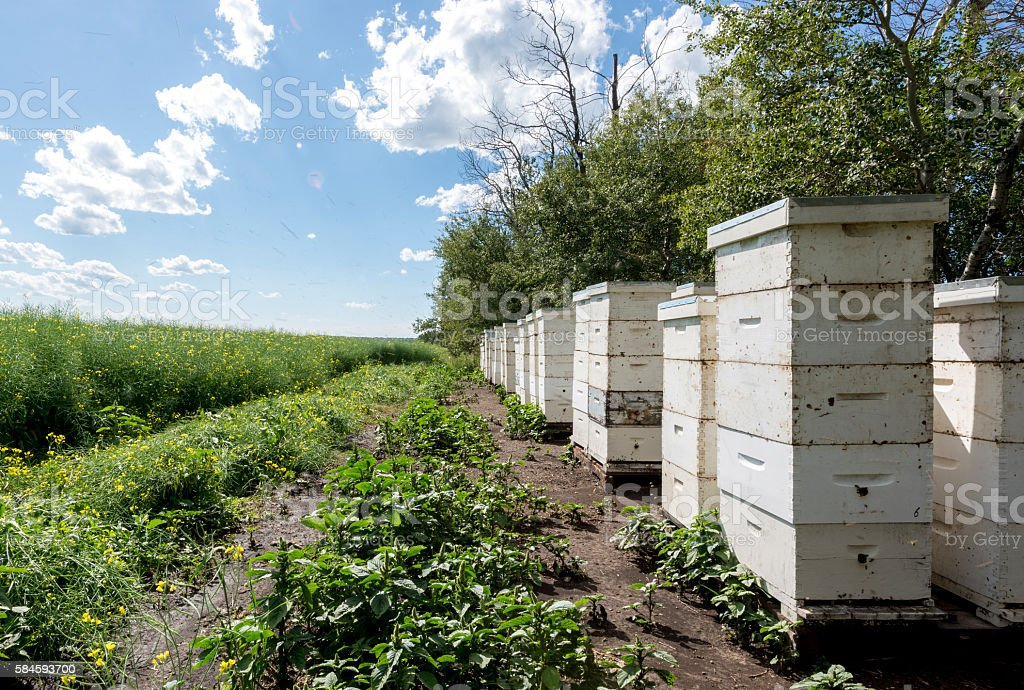 Bee hives on the edge of a farm field stock photo