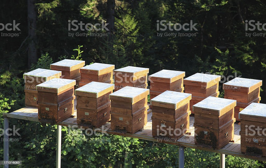 Bee Hives stock photo