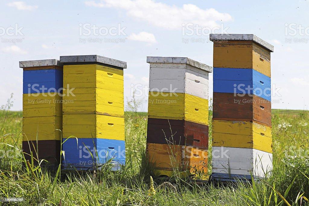 Bee hives royalty-free stock photo