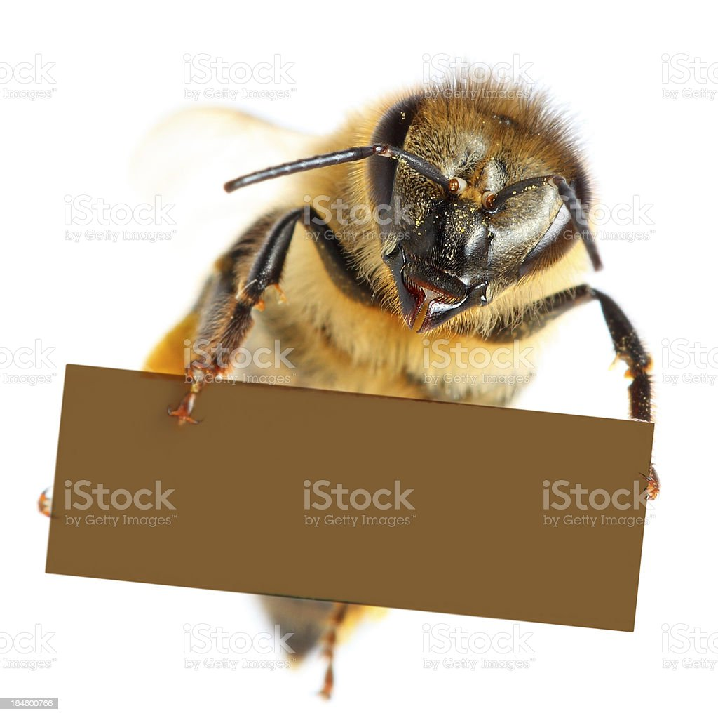 Bee holding blank placard royalty-free stock photo