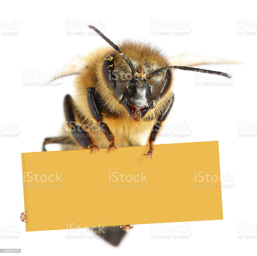 Bee holding blank placard stock photo
