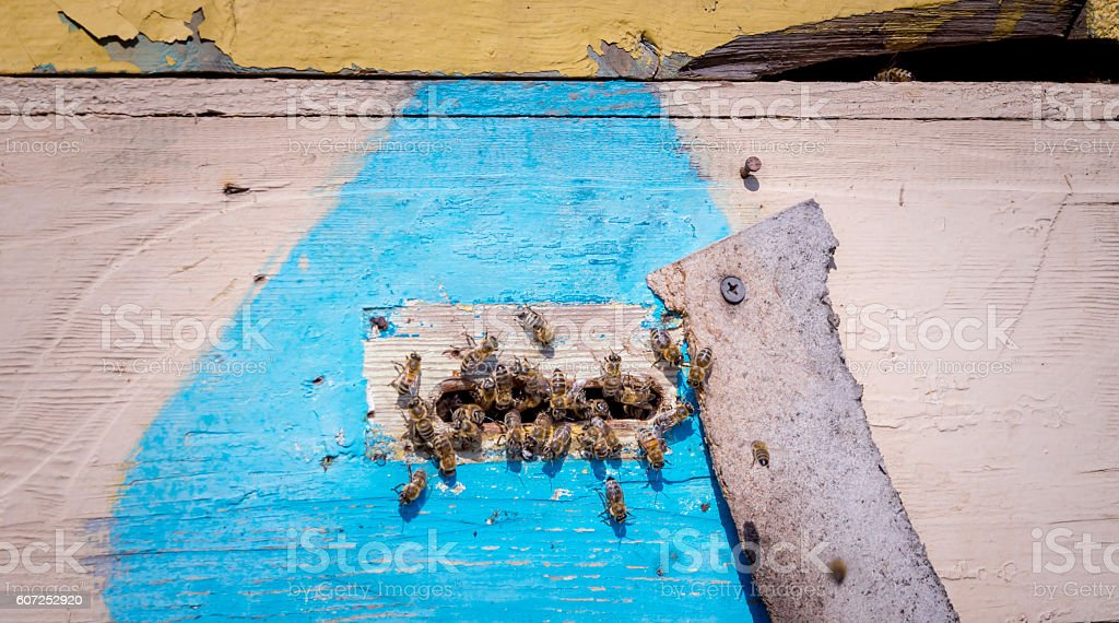 Bee housing. Rustic bee hive stock photo