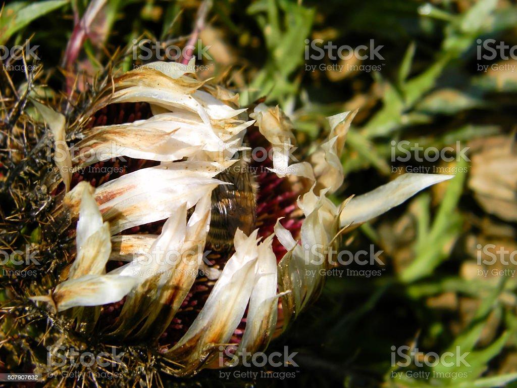 Abeja en flor foto de stock libre de derechos