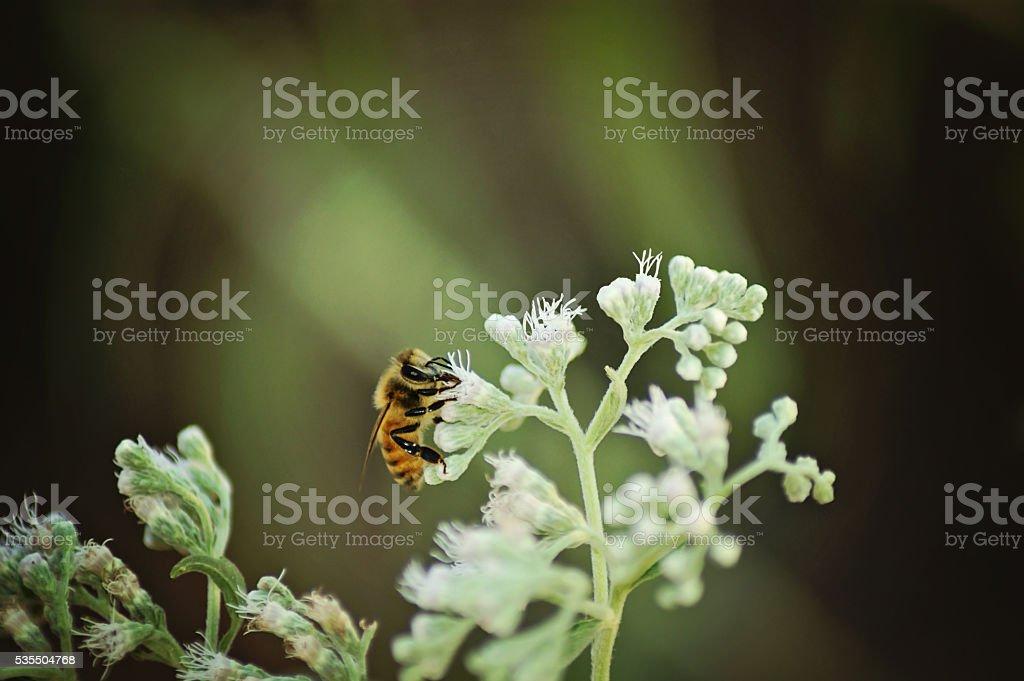 bee in flowers stock photo