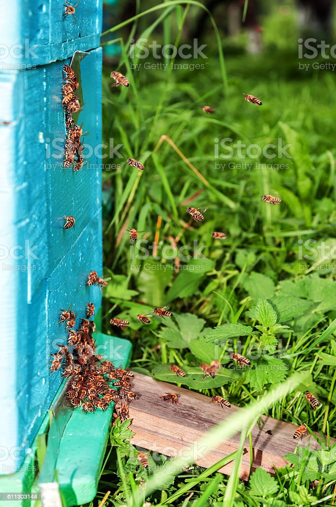 bee, insects, hive stock photo