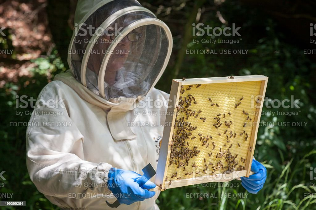 bee keeper is checking the bee colony stock photo