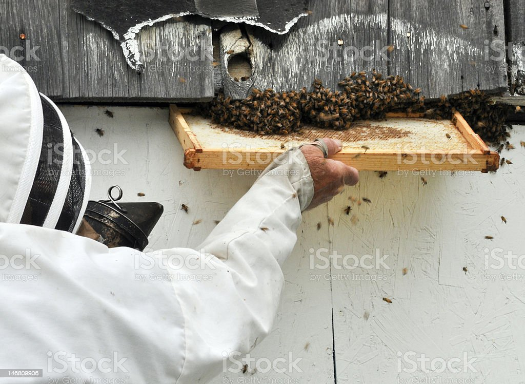 Bee Keeper royalty-free stock photo