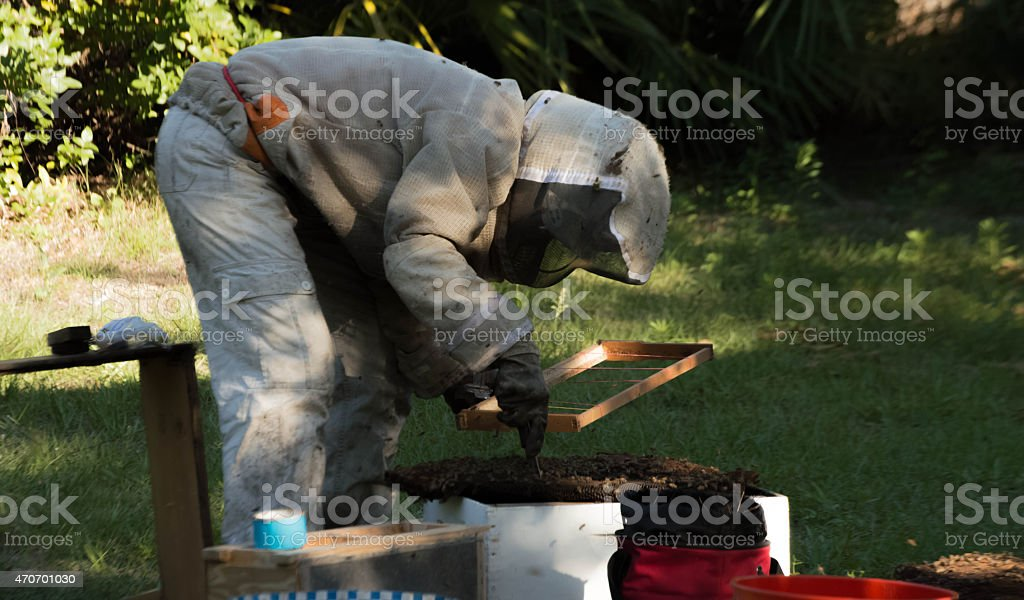Bee Keeper Removing Honey Bee Nest stock photo