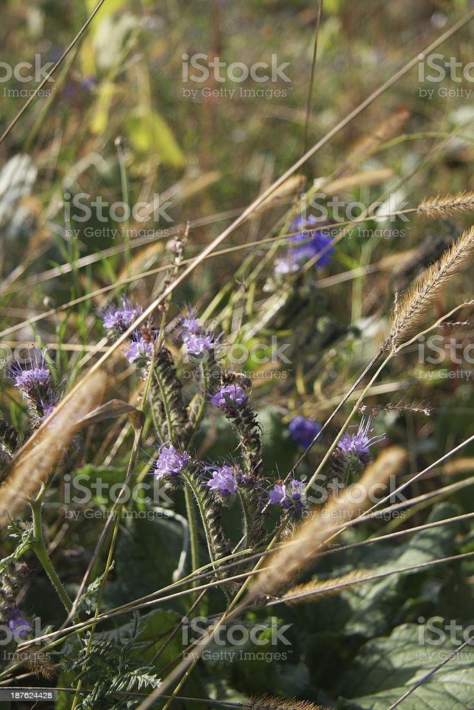 Bee on a purple flower stock photo