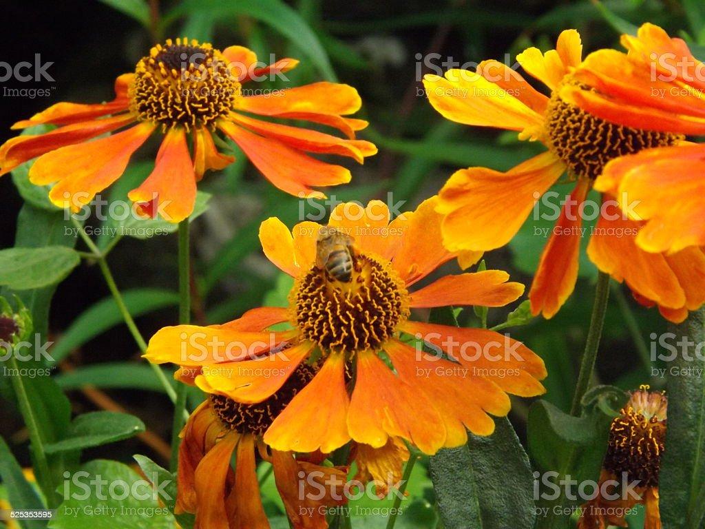 Bee on flower stock photo