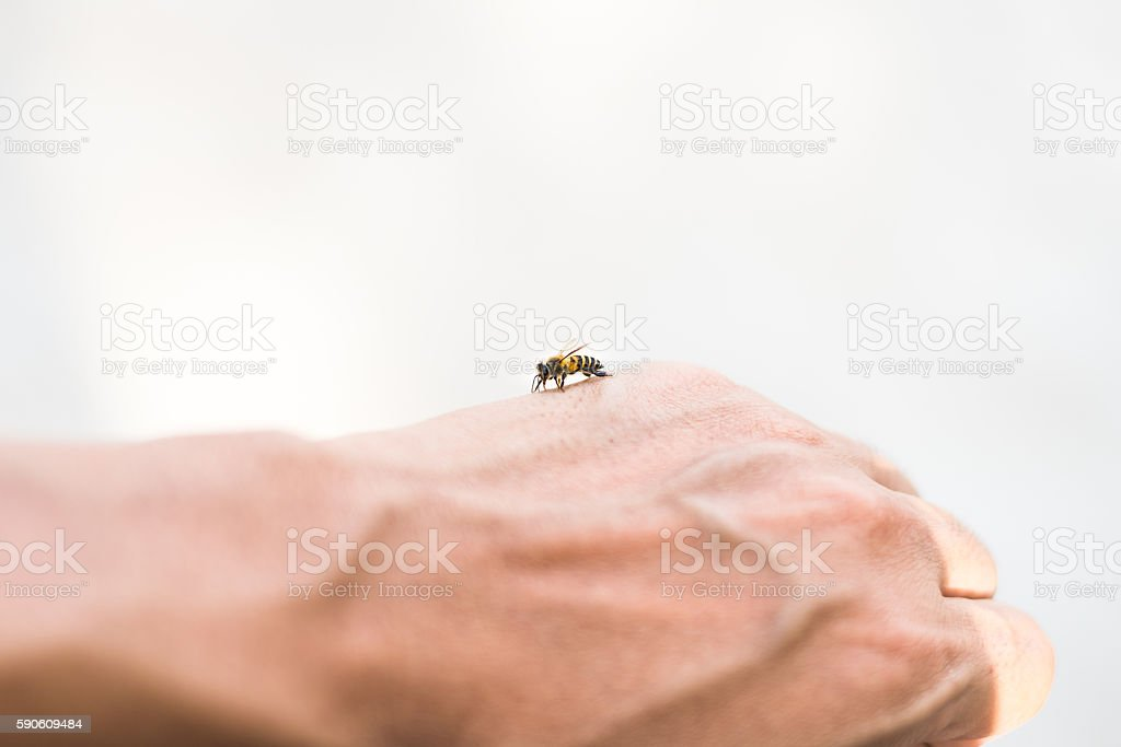 Bee On Hand stock photo