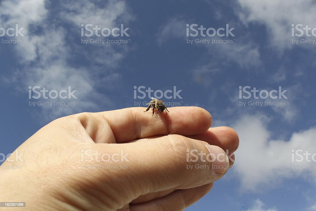 bee on my hand stock photo
