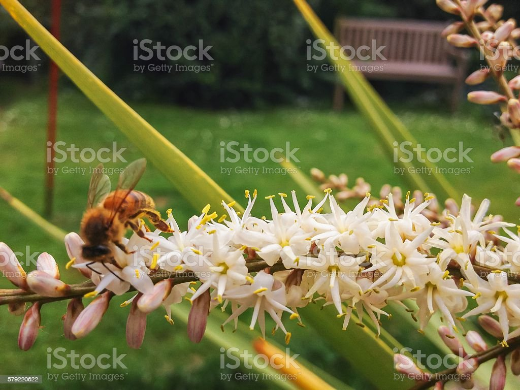 Bee on Palm Tree Flower stock photo