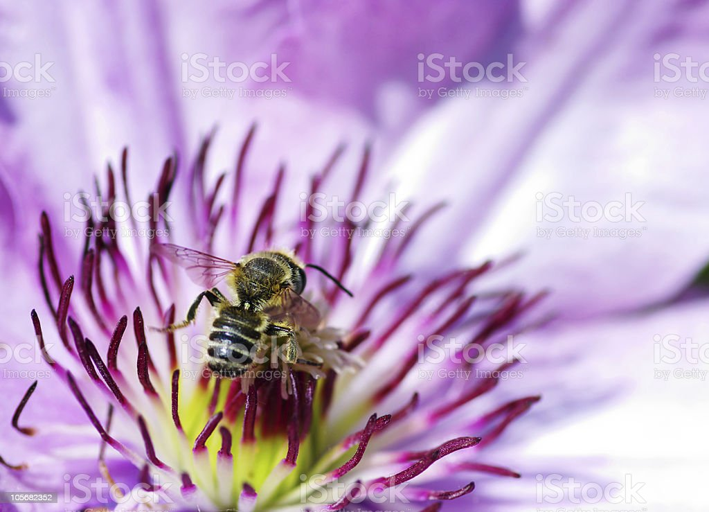 Bee on the flower stock photo