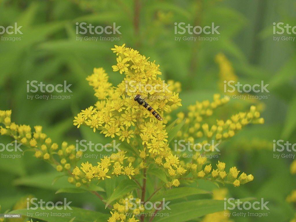Pszczoła na kwiat zbiór zdjęć royalty-free