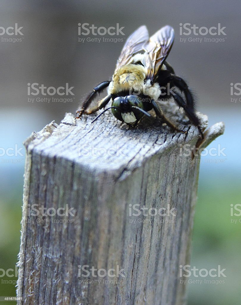 Bee on Top of Wooden Post stock photo