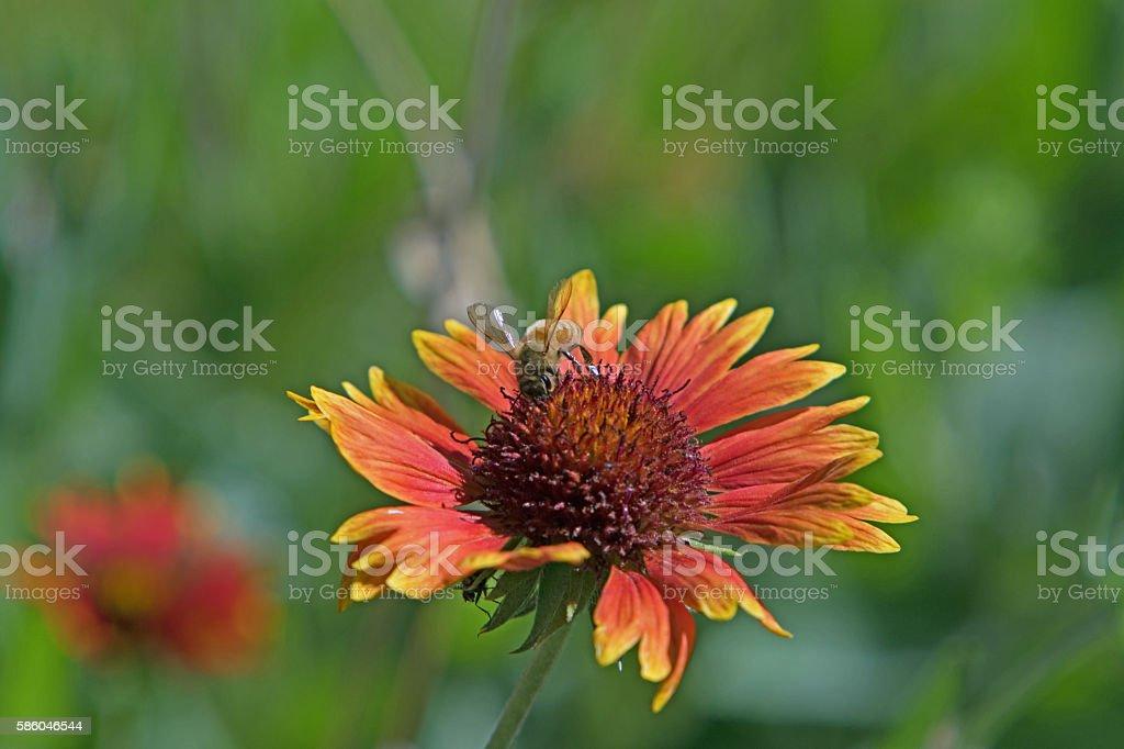 Bee on wild flower stock photo